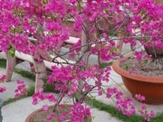 1.6-de jolies fleurs dans les espaces publics